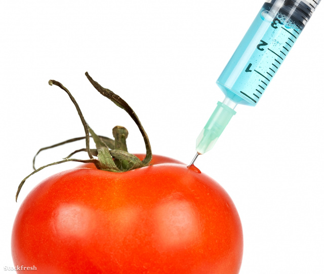 stockfresh 204863 tomato-with-syringe-inserted sizeM