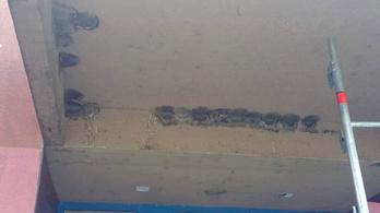 Több száz fecske fészkét verték le Szolnokon egy építkezésnél