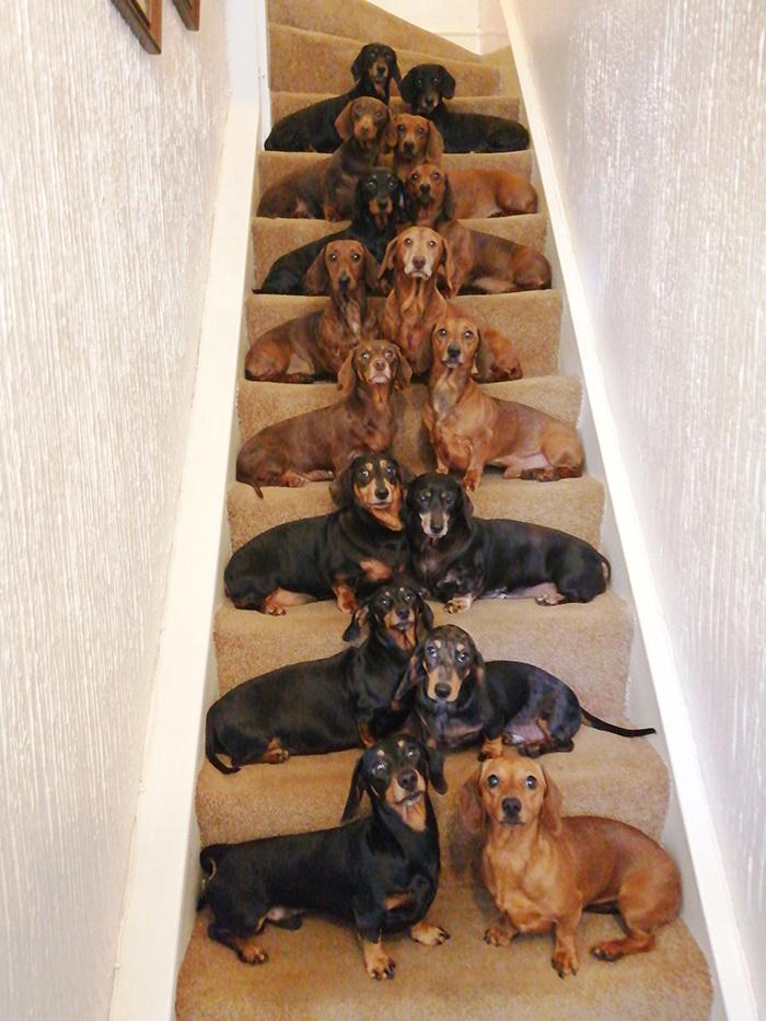 A kutyusok név szerint Saffie, Daisy, Dudley, Wallie, Diamond, Ruby, Benjie, Buster, Bonnie, Ziggy, Sammy, Kizzy, Kiki, Zac, Duke és Lottie.