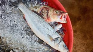 Mennyire ártalmas a halakban található higany?