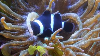 A fényszennyezés a tengerek élővilágában is károkat okoz