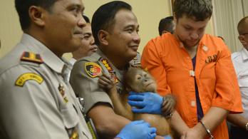 Bőröndbe rejtve akart élő orángutánt kicsempészni egy turista Indonéziából