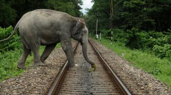 Méhzümmögéssel tartják távol Indiában az elefántokat a vasúti sínektől