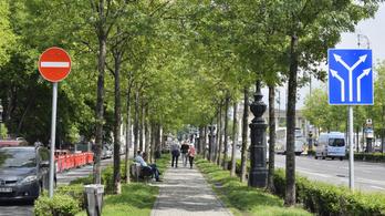 Kivágnak 8 beteg fát az Andrássy úti fasorból, helyettük újakat ültetnek