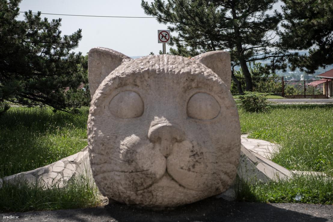 """Így néz ki a macska elölről. Ugye mindenki látja a tökéletesen elhelyezett """"kutyáknak tilos"""" táblát a parkban"""