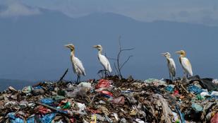 Amerikában már 50 éve betiltották volna a műanyagot, de jött az ipari lobbi