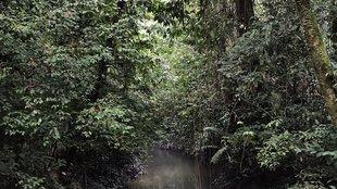 Borneói esőerdők mélyén
