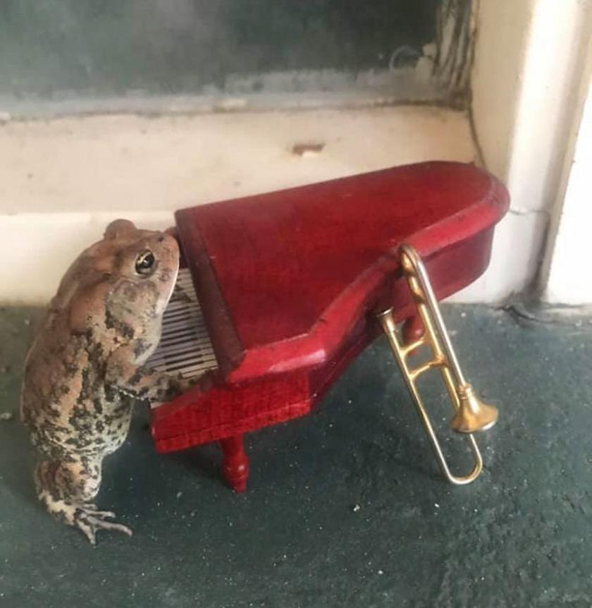 beka-zongora