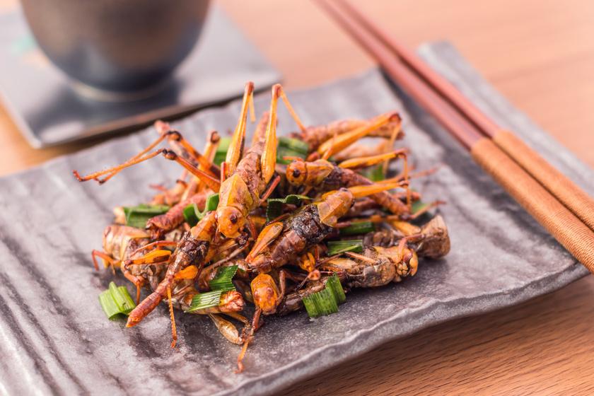 Újabb okot találtak a tudósok arra, hogy rovarokat együnk - Bizarr, de egészséges lehet