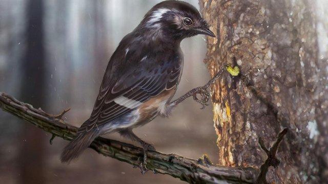 Bizarr madárvégtag a mianmari borostyánkőből