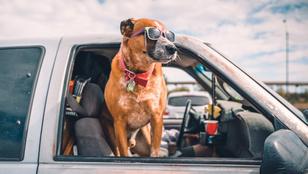 Ezekre figyelj, ha együtt nyaralnál a kutyáddal