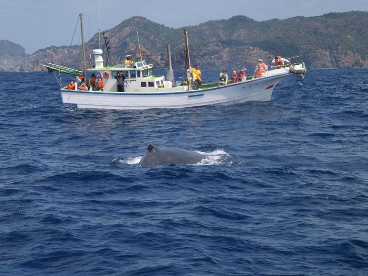Japántól délre hajózó bálnafigyelő túra