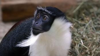 28 ezer fajt fenyeget kihalás