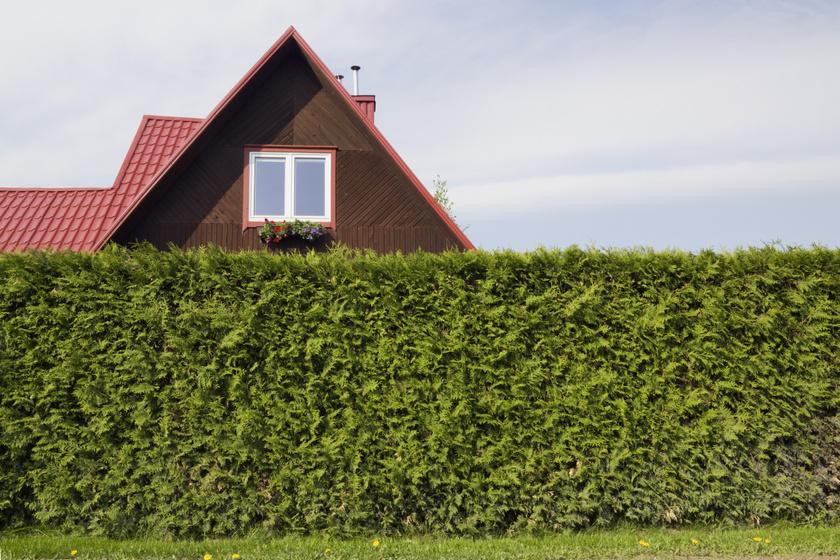 Senki nem fog belátni a kertbe, ha így alakítod ki a kerítést: így készíts növényfalat