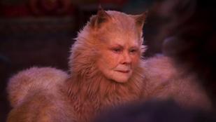 Rémálmainkból léptek elő a macskásított világsztárok