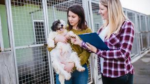 Szerelem első látásra, vagy tudatos döntés a kutyaválasztás?