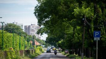 Az Index megmentett 37 fát a Szentendrei úton