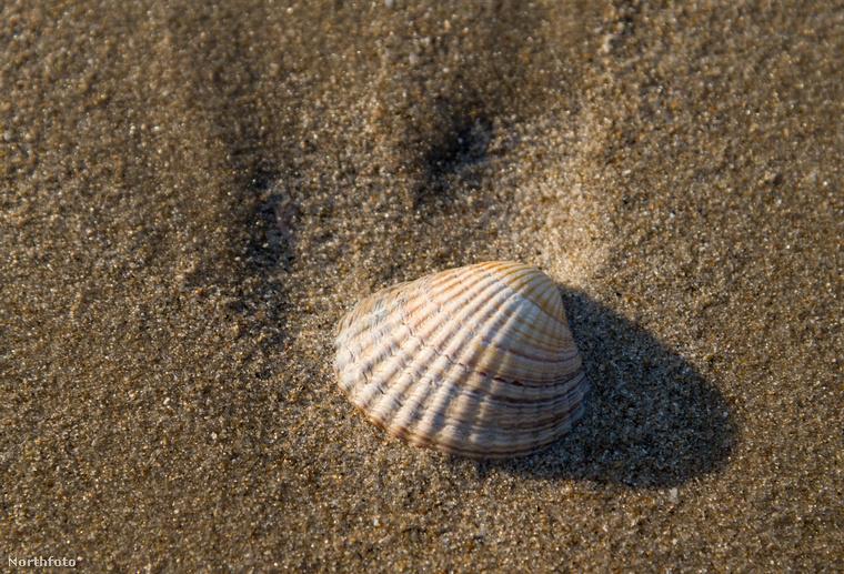 Árapály idején, amikor a vízszint visszahúzódik, hatalmas homokos felület bukkan felszínre alóla, mely úgy néz ki, mint egy sivatag, a felszínén található árkokat a víz rajzolta bele.
