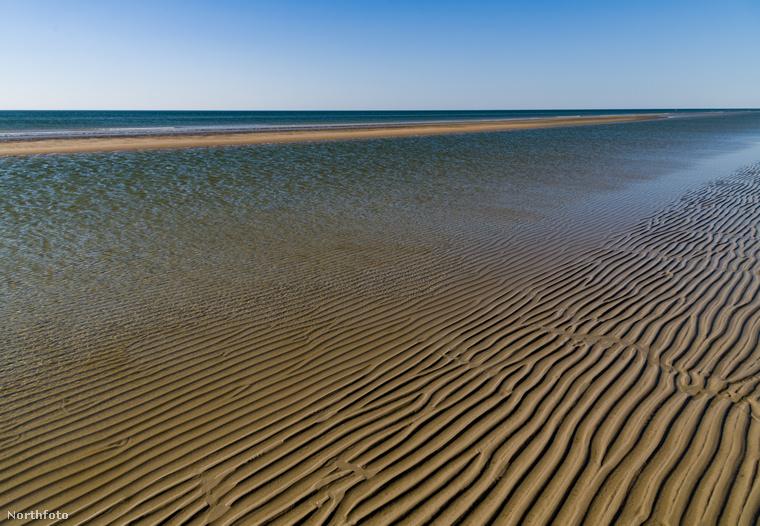 Bármennyire is sivárnak tűnik, valójában rengeteg csiga és kagyló otthona a homokos tengerpart, ahol még olyan ritka tengeri emlősök is megtalálhatóak, mint a kúpos fóka vagy barna delfin.