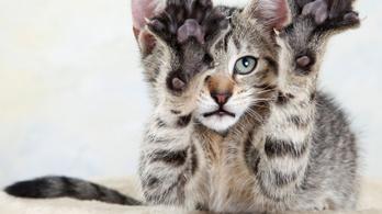 New York államban mostantól állatkínzásnak számít, ha kiszedeted a macska karmait