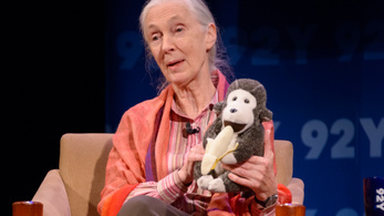 Jane Goodall is eljön a Sziget Nagyszínpadára