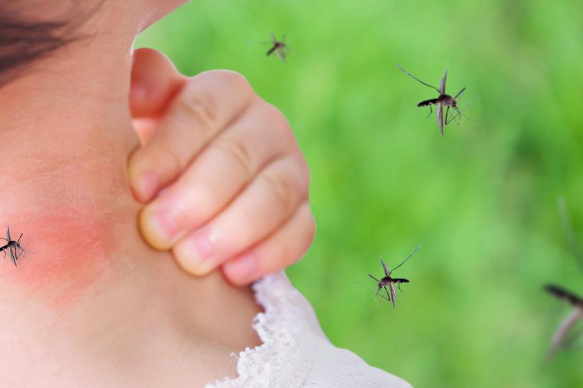 Ügyes megoldás szúnyogok ellen: nálad is van otthon a legjobb szúnyogriasztóból