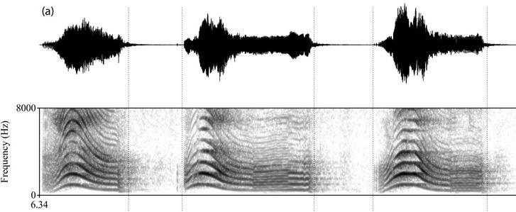 A lejátszott kutyasírás-minták akusztikai szerkezete. Felül az úgynevezett oszcillogramm, vagyis a hangnyomás ingadozása az időben, míg alul a spektrogramm, a domináns frekvenciasávok hullámzása az időben