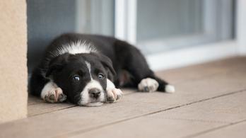 A kölykök sírása egyik kutyát sem hagyja hidegen