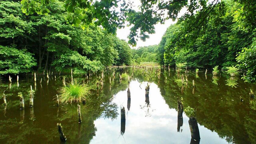 A bakonyi táborok egyik úti célja a bakonyi Gyilkos-tó.