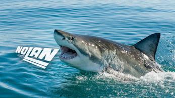 A Shark bekebelezte a Nolant