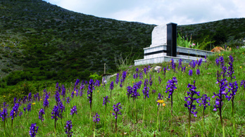 A temetőkben támadnak fel az orchideák