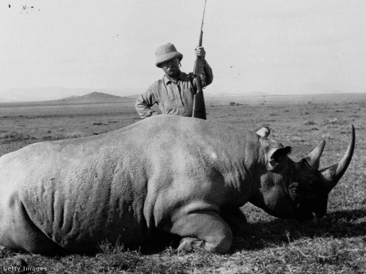 Theodore Roosevelt egy afrikai szafarin lelőtt orrszarvú tetemével pózol 1909-ben
