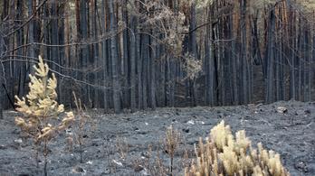 Hatalmas pusztítást okoz a szárazság a németországi erdőkben