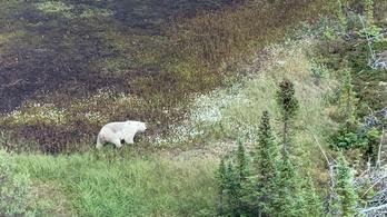 Könyörtelen vadonban rejtőzhet a két gyilkossággal vádolt kanadai tinédzser