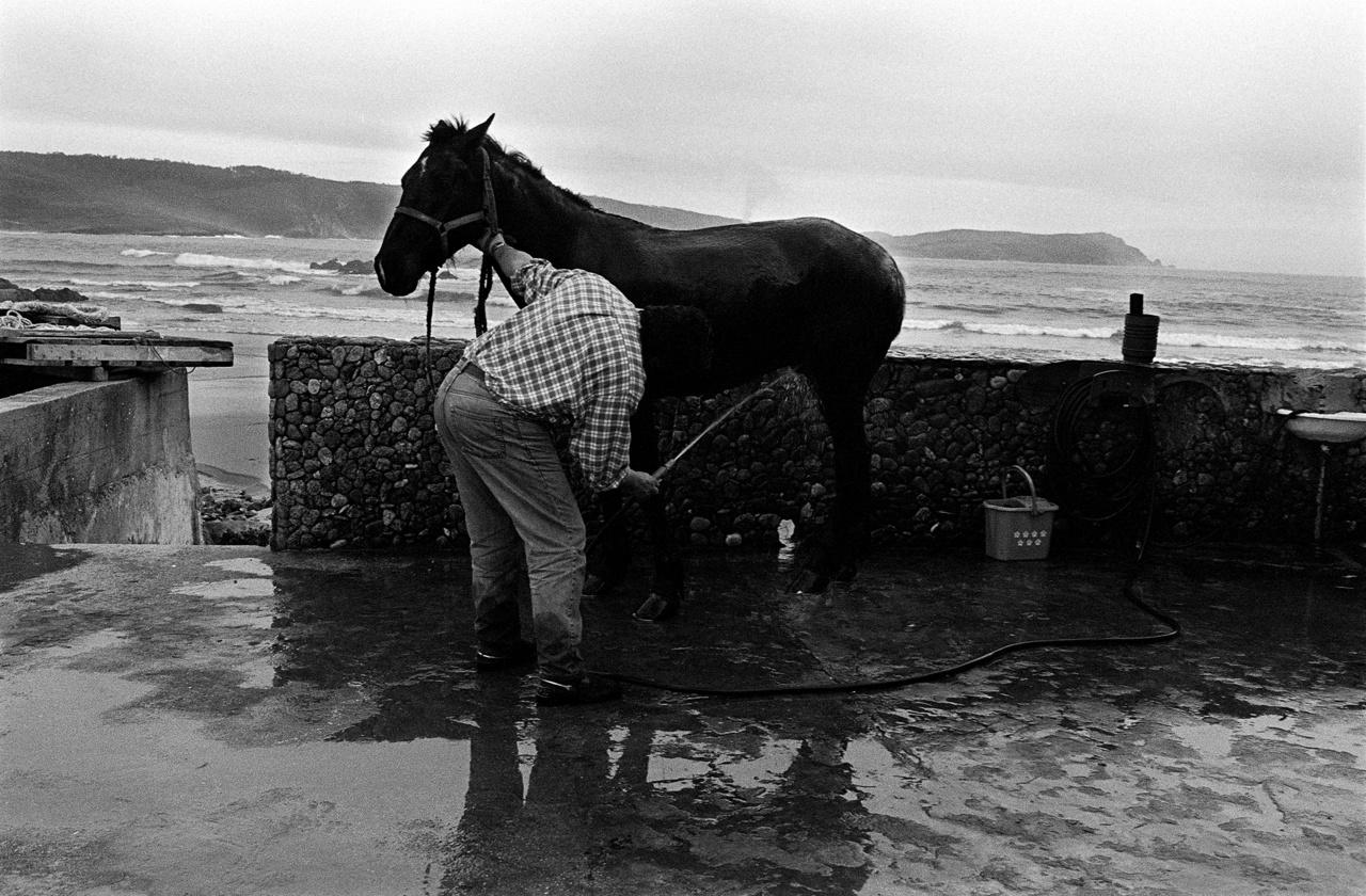 """Lovat mosdatnak a spanyolországi Murosban.A part """"számtalan követség, sirály-diplomácia és medúza-export határvidéke; találkozók, sőt légyottok terepe."""" A művészettörténész szerint a part egy nyitott, de veszélyes határ az ismert és az ismeretlen között, amelyet csak néhány kétéltű, rákféle és tengeri emlős léphet át büntetlenül."""