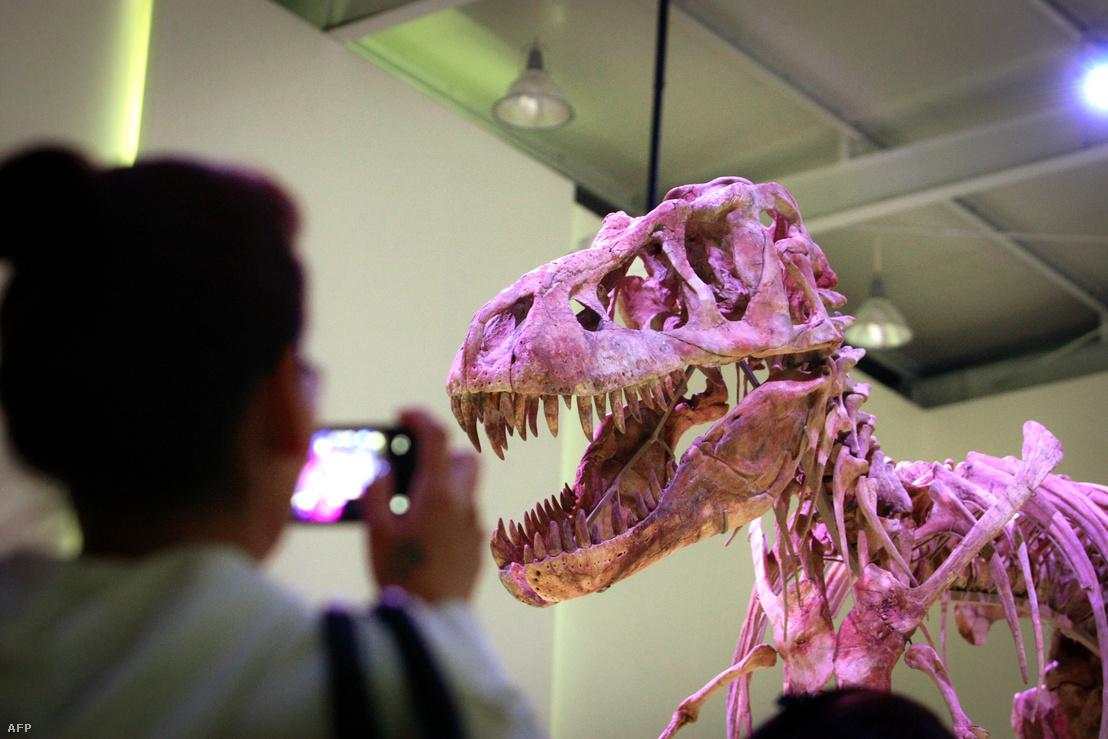 A Nicolas Cage által megvásárolt 70 millió éves Tyrannosaurus bataar koponya, ami 2013 óta Mongólia fővárosában, Ulánbátorban látható.