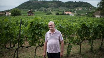 Ezt a tájat Isten is a borászatra teremtette