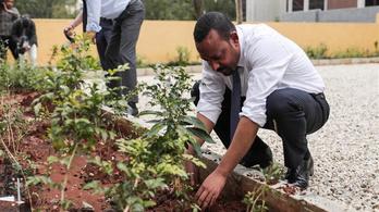 Egy nap alatt 350 millió fát ültettek Etiópiában