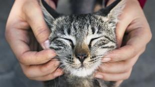 Így simogasd a macskád, hogy jó is legyen neki