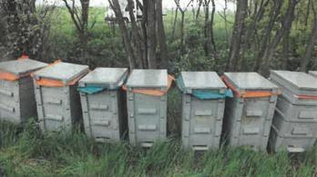 Apa és fia lopott méheket Nagyszénáson