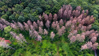 Tavaly óta 110 ezer hektár német erdő pusztult ki
