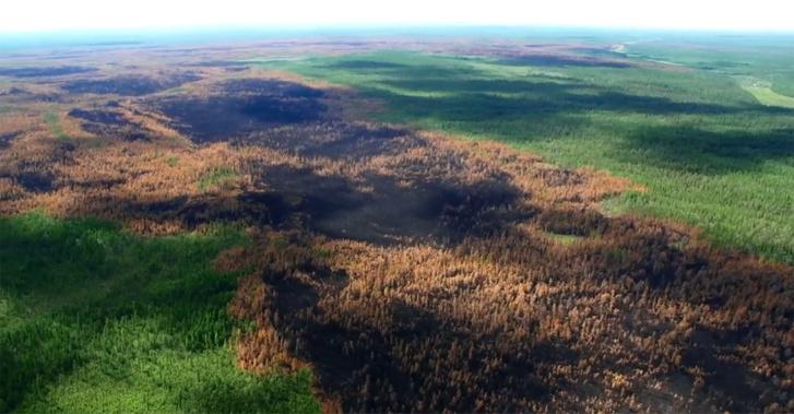 Légi felvétel a több mint egymillió hektár területen leégett erdőről Krasznojarszk területén.