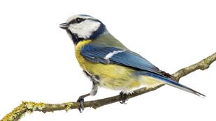 Ezért lett színes a madarak tolla