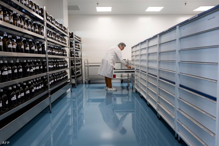 Egy technikus homeopátiás gyógyszereket készít a Boiron termelési laboratóriumában