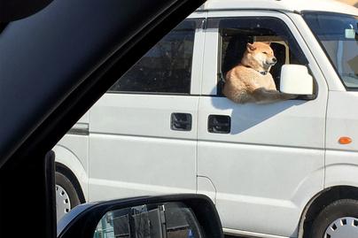 kutya-kocsiban