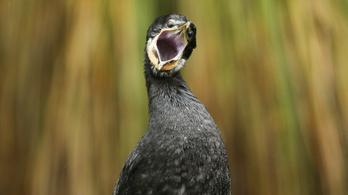 50 millió évnyi kárt okozott az ember megjelenése az új-zélandi madárvilágnak