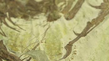 Egy méter magas óriás őspapagájt találtak