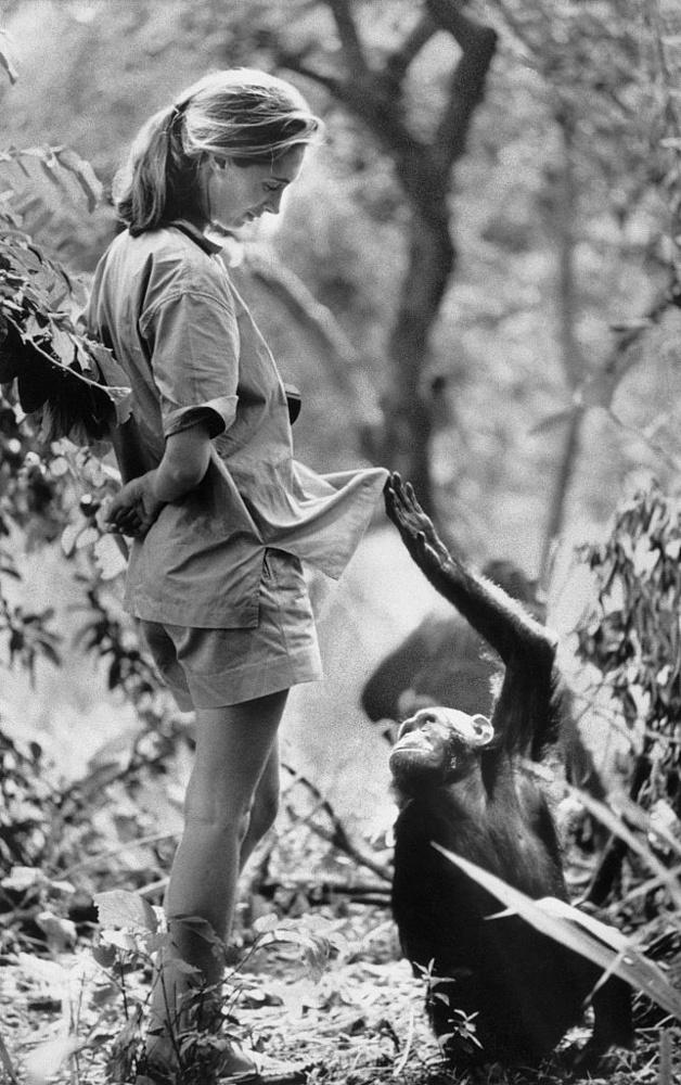 Az 1934-ben született Jane Goodall gyerekkorát Angliában, főként házuk felfedezésre váró kertjében töltötte