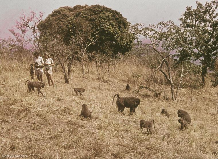 Jane-t édesanyja is elkísérte, aki miközben lánya naphosszat a vidéket járta, a helyi őslakosok betegségeit kúrálta
