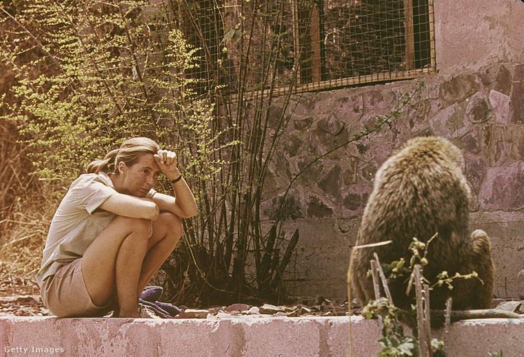 Jane gyerekkori álma volt, hogy Afrikában élhessen az állatok között